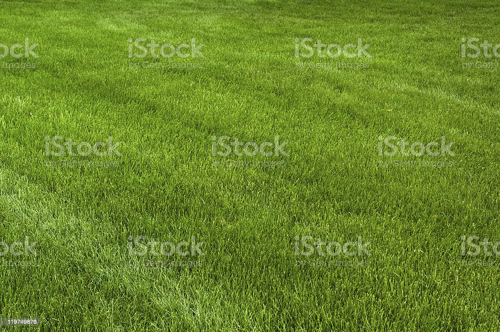 Freshly cut, mowed grass on Summer's first evening stock photo