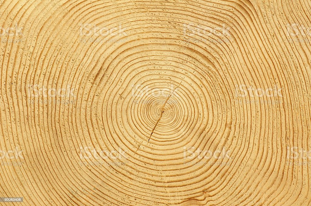A freshly cut tree trunk displaying many tree rings royalty-free stock photo