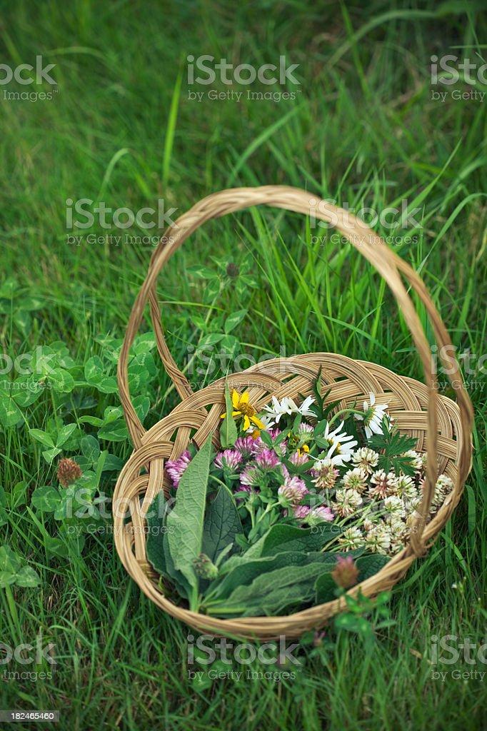 Freshly Foraged Herbs royalty-free stock photo