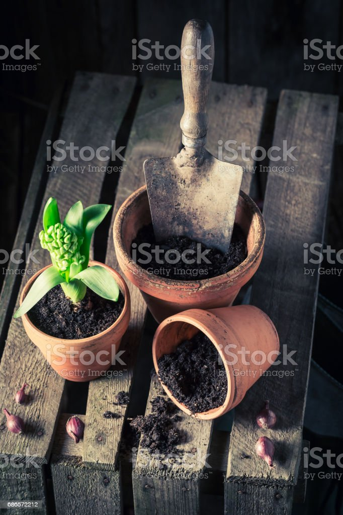 Freshly grown spring flowers on old wooden box royalty free stockfoto