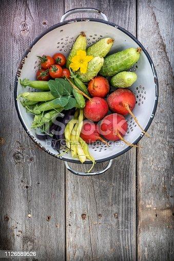 Freshly harvested garden vegetables from organic garden