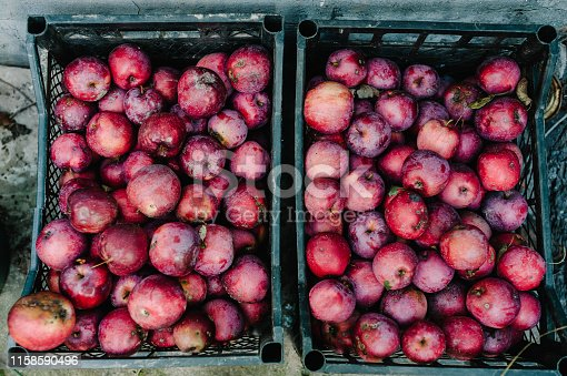 Freshly harvested juicy flavorful red apples in plastic crates. Apple in box in the store. Free space for text . Flat lay. Top view.