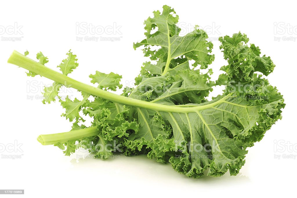 freshly harvested kale cabbage stock photo