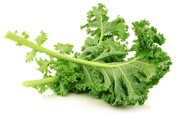 freshly harvested kale cabbage freshly harvested kale cabbage on a white background kale stock pictures, royalty-free photos & images
