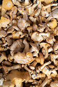Freshly harvested healthy mushrooms background. Edible mushrooms