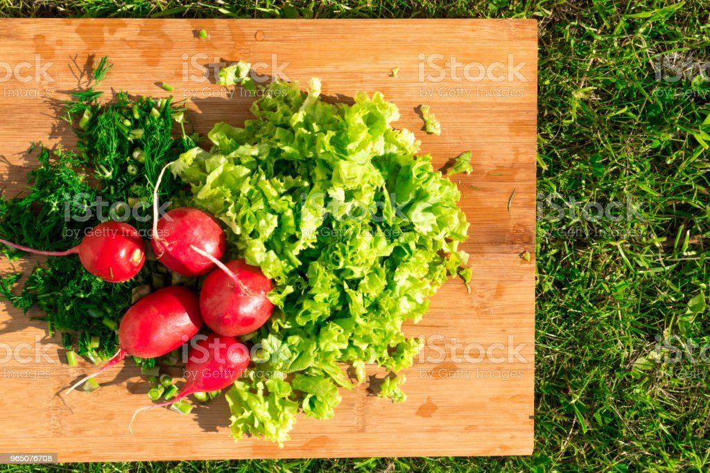 Freshly harvested, purple colorful radish, green salad and dill on wooden board in sunny day. Vegan food. royalty-free stock photo