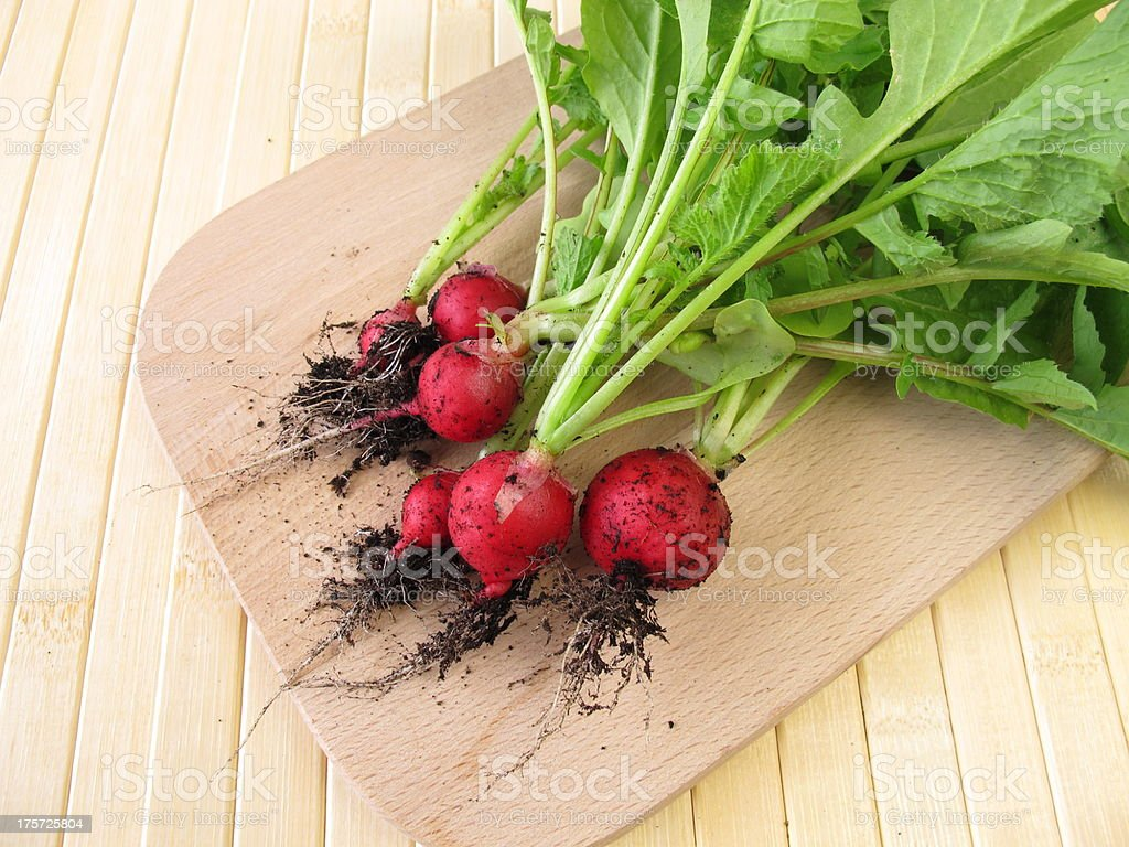 Freshly harvested radishes with earth royalty-free stock photo