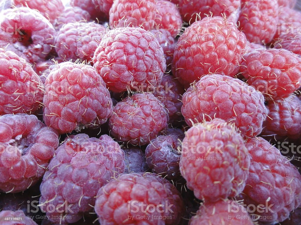 Freshly harvested raspberries​​​ foto