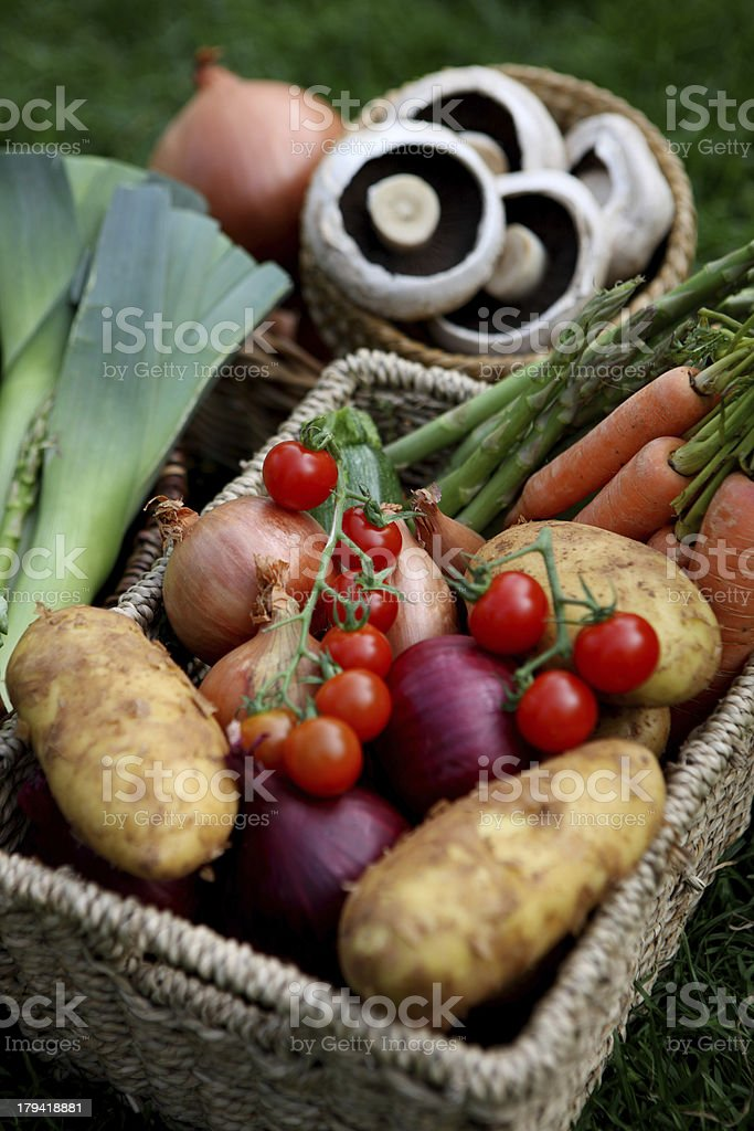 Freshly harvested vegetables royalty-free stock photo
