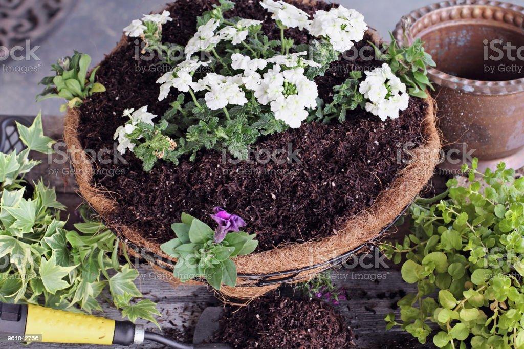 Freshly Made Hanging Flower Basket royalty-free stock photo