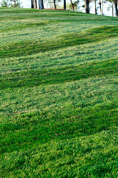 Freshly mowed grass up a hill stock photo