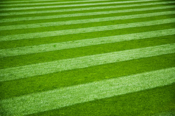 Freshly mowed grass with stripes from mower stock photo
