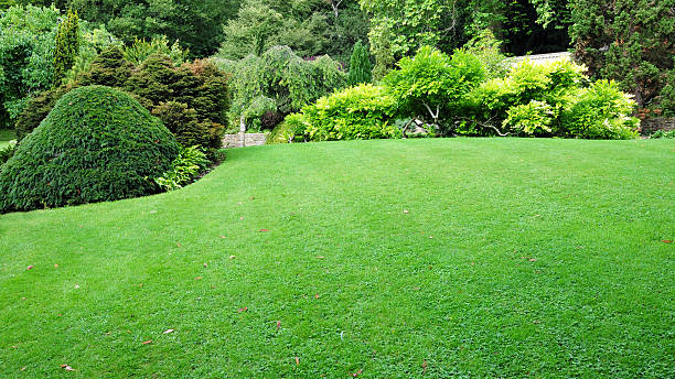 freshly mowed green lawn with lush trees around - lawn stock pictures, royalty-free photos & images