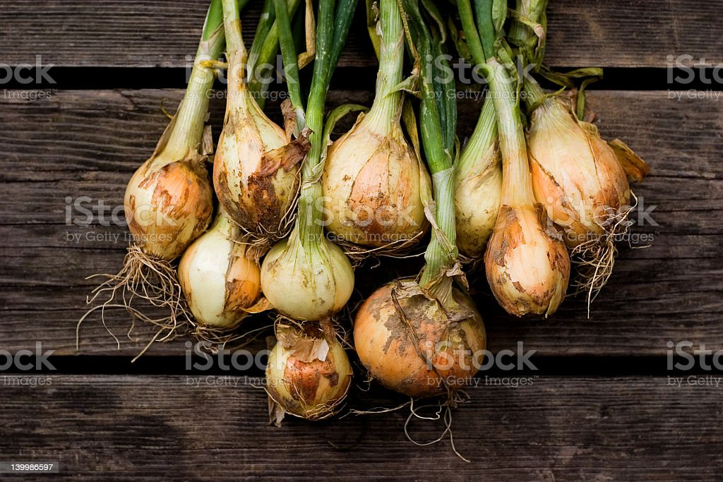 Freshly picked all natural onions stock photo