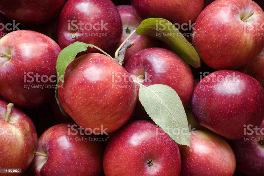 Freshly Picked Apples royalty-free stock photo