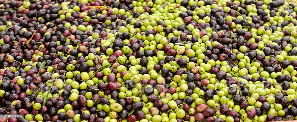 Freshly picked black and green olives landscape stock photo