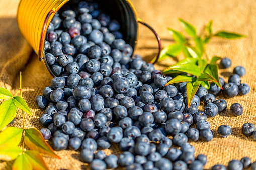 533340696 istock photo Freshly picked blueberries 815261616