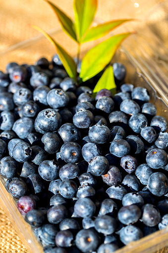 533340696 istock photo Freshly picked blueberries 815263714
