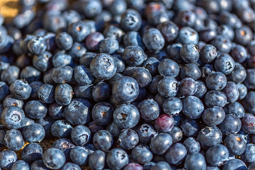533340696 istock photo Freshly picked blueberries 815334612