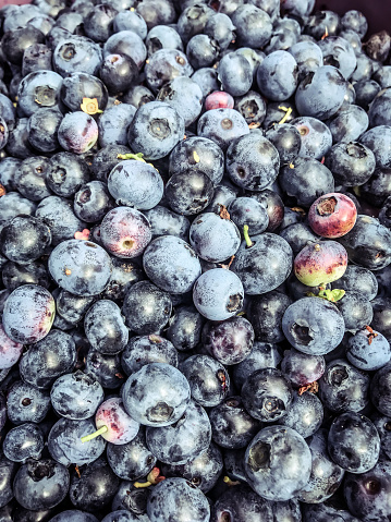 533340696 istock photo Freshly picked blueberries 836279932