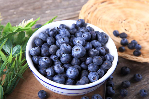 Freshly picked blueberries stock photo
