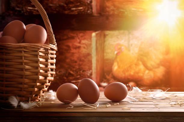 Freshly picked eggs in basket with chicken within henhouse backg - foto de stock