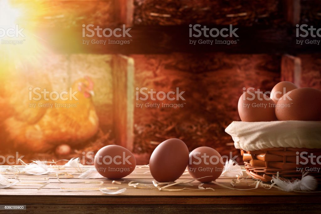 Freshly picked eggs in basket within a henhouse background stock photo