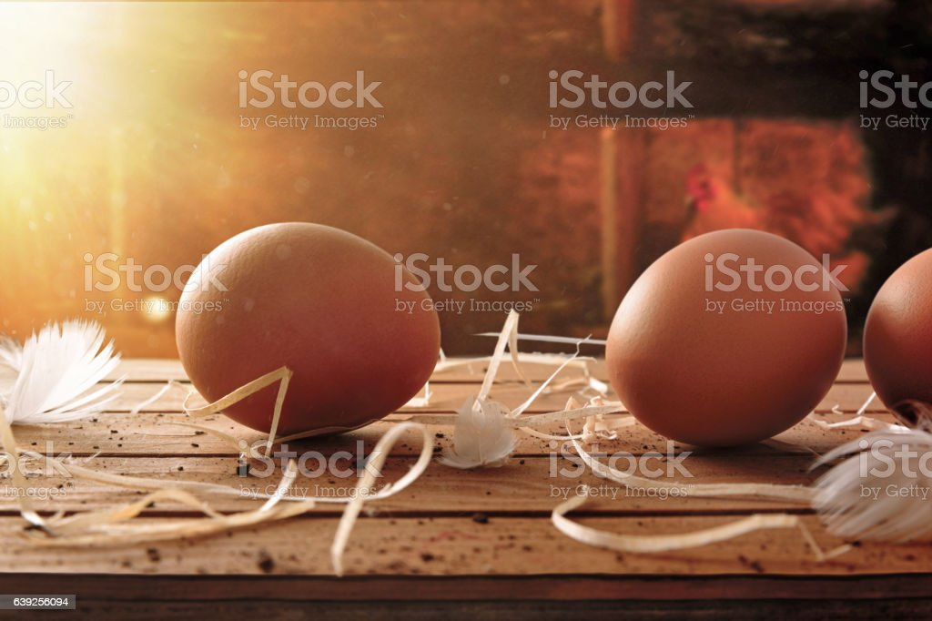 Freshly picked eggs on table with chicken within henhouse background stock photo