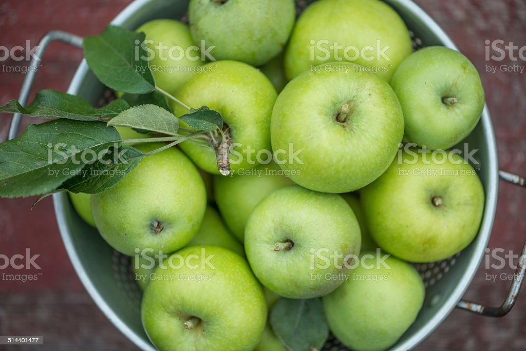 Freshly Picked Homegrown Green Apples stock photo