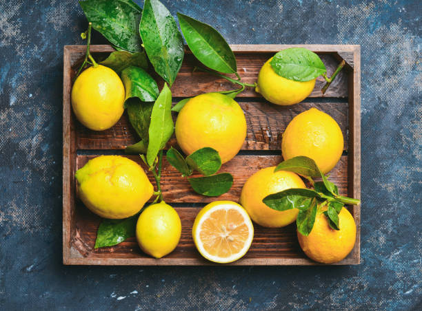 Freshly picked lemons with leaves stock photo