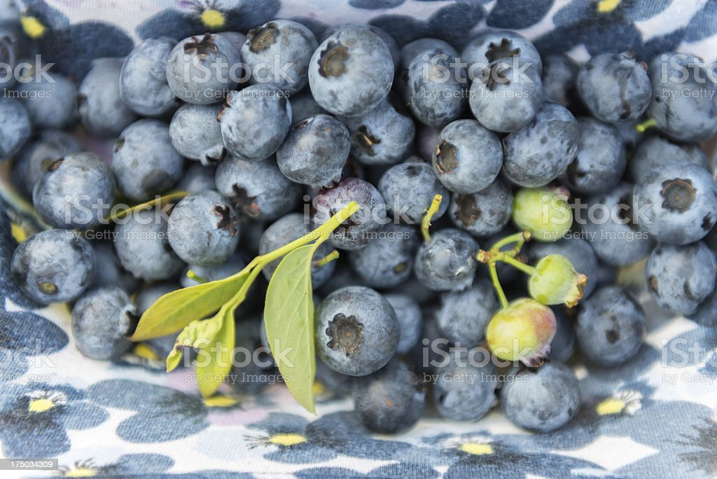 Freshly Picked Organic Blueberries on a Fabric Background royalty-free stock photo