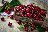 Freshly picked organic cherries in a bowl