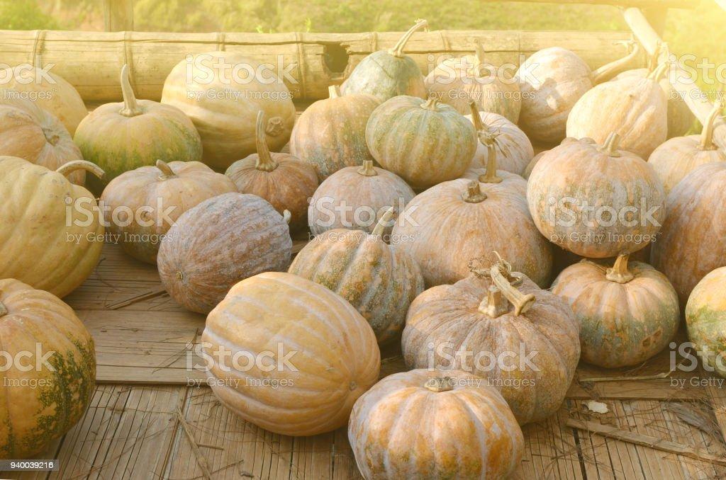 freshly picked pumpkins stock photo