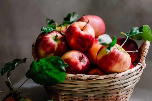 Freshly picked red apples from an apple tree in a wicker basket