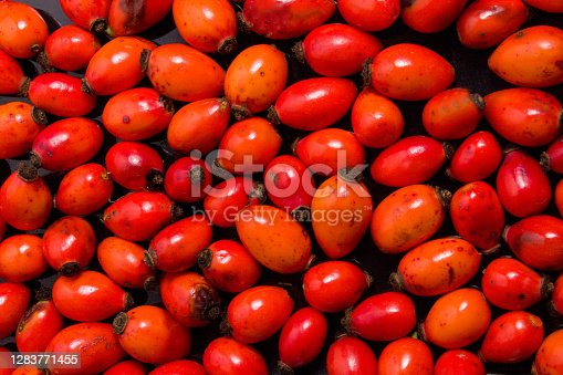 Freshly picked rose hips. Full frame shot of rose hip or rosehip, commonly known as the dog rose Rosa canina