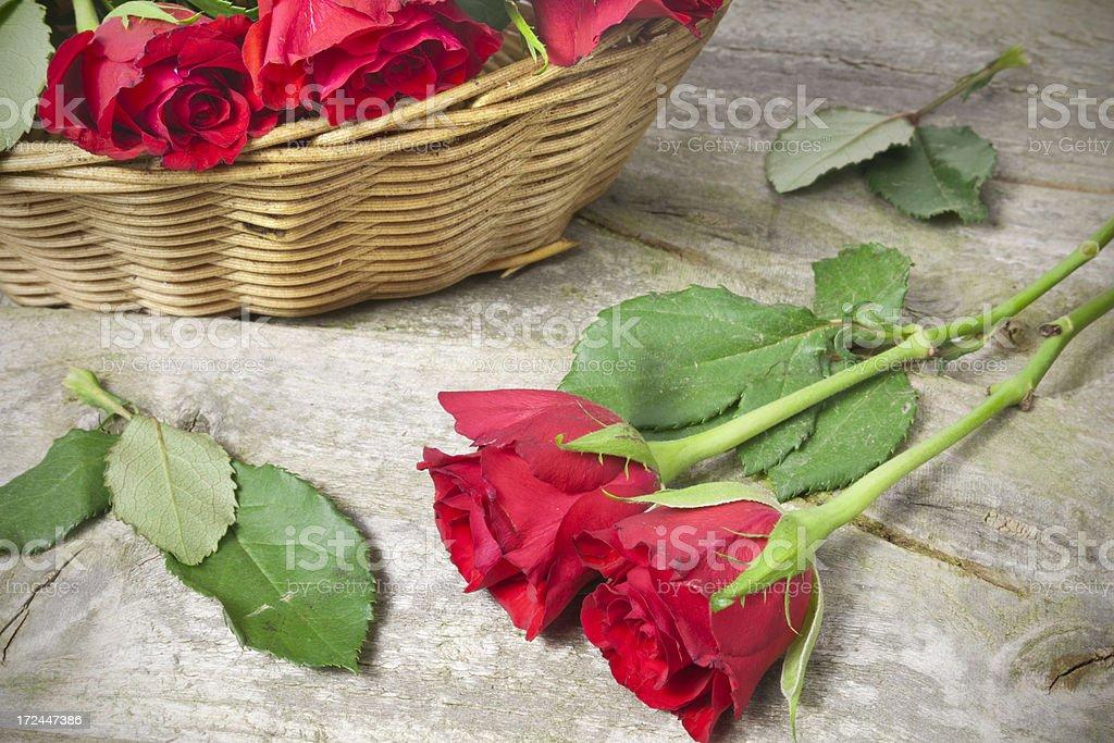 Freshly picked roses royalty-free stock photo