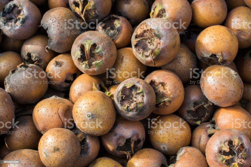 Vers pakte Mispel fruit soorten mespilus germanica in vak - Royalty-free Biologisch Stockfoto