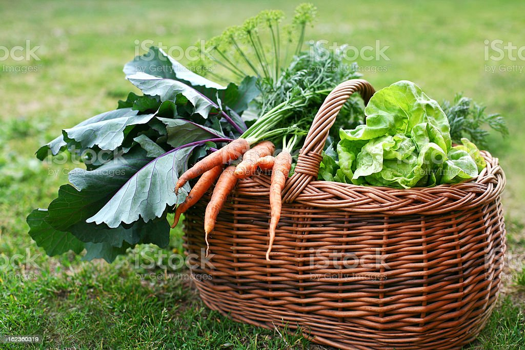 Freshly picked vegetables in a wicker basket. royalty-free stock photo
