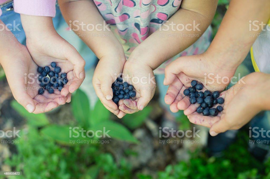 Frisch gepflückte wild Blaubeeren in children