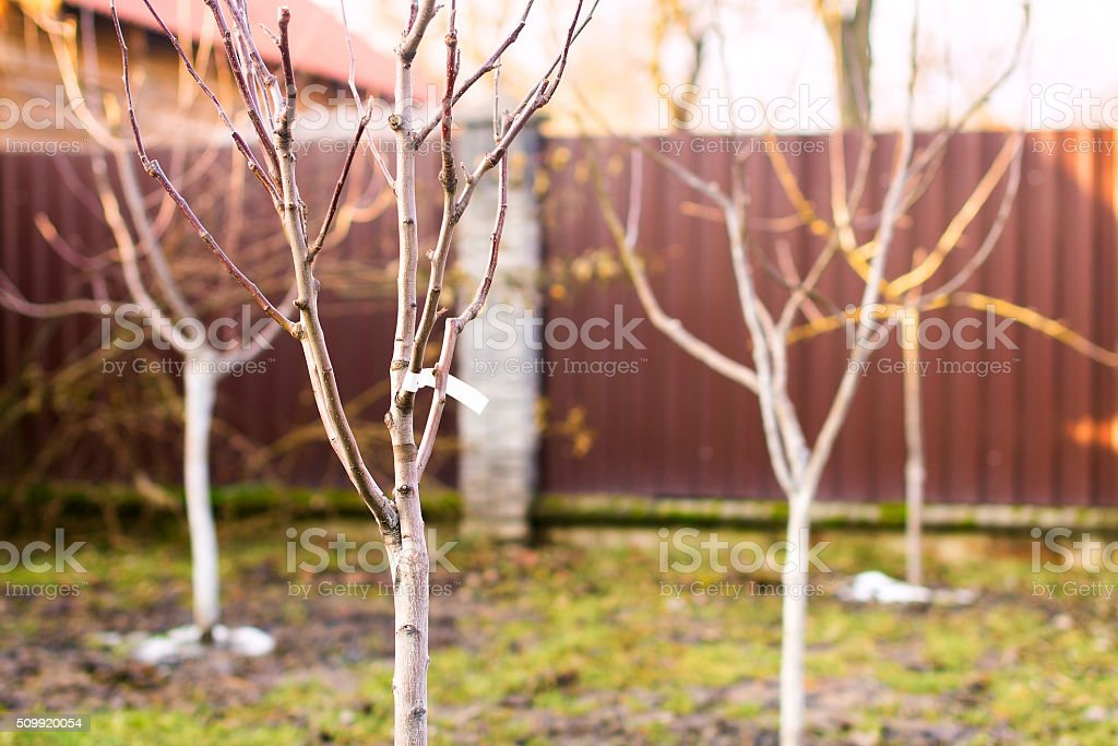 Freshly planted trees stock photo