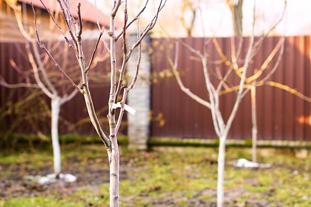 Freshly planted trees stock photo