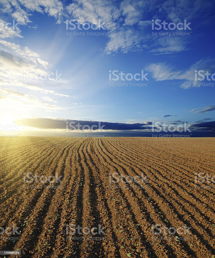 A freshly ploughs field on a sunny day stock photo