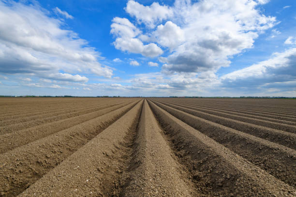 Freshly plowed potato field with straight line pattern and diminishing perspective stock photo