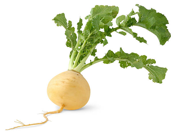A freshly rooted turnip on a white background stock photo
