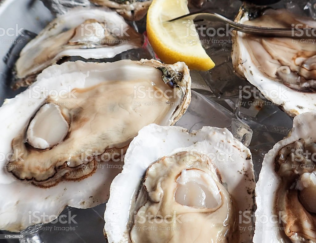 Freshly shucked oysters stock photo