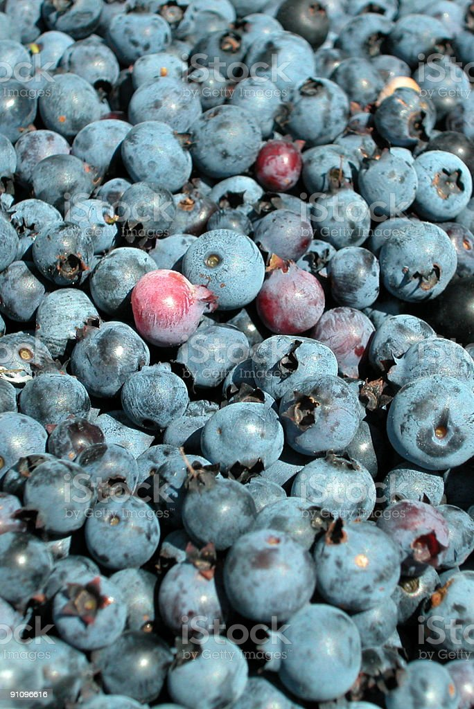 Freshly Washed Blueberry Background stock photo