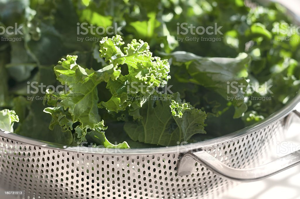 Freshly Washed Green Kale in a Colander royalty-free stock photo