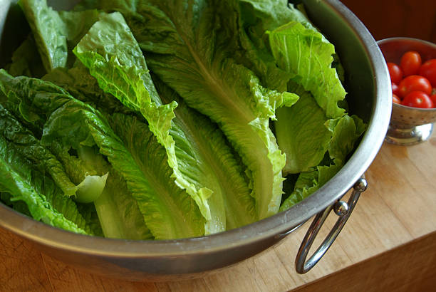 Freshly washed romaine lettuce in a large bowl Horizontal image of romaine lettuce freshly washed and placed in a large stainless steel bowl. A small colander of cherry tomatoes is in the background. The image has shallow depth of field, the focus is on the center of the image. romaine lettuce stock pictures, royalty-free photos & images