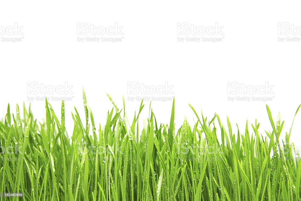 Freshly watered grassy field stock photo