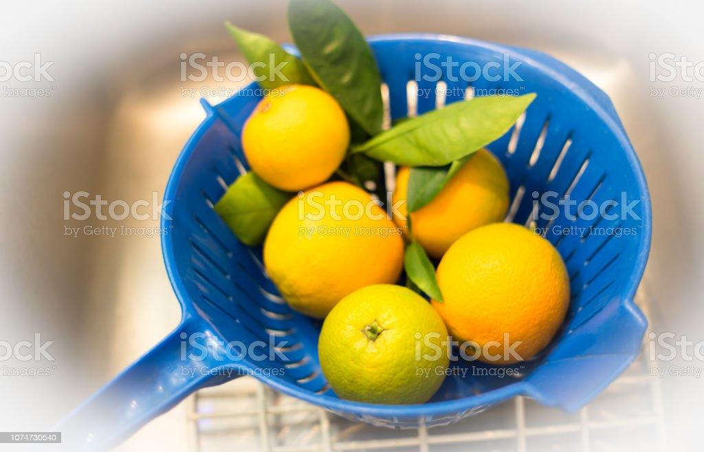 Freshly-picked oranges in blue colander in kitchen sink.